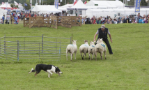 Arena Sheep Dog Trials