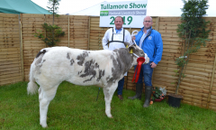 tullamore-show-11-th-aug-2019-042