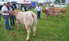 tullamore-show-2018-12-th-aug-035-large--1