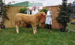 tullamore-show-2018-12-th-aug-042-large-