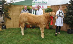 tullamore-show-2018-12-th-aug-044-large-