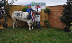tullamore-show-2018-12-th-aug-112-large-