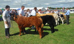 tullamore-show-2018-12-th-aug-176-large-