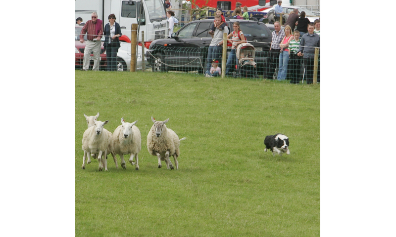 2010-tullamore-show-ger-036