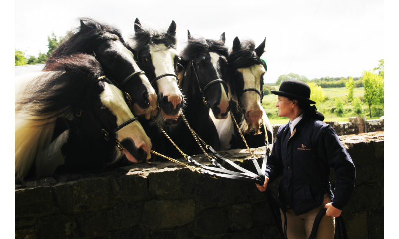 one-woman-six-stallions.pauric-hanlon-3-3