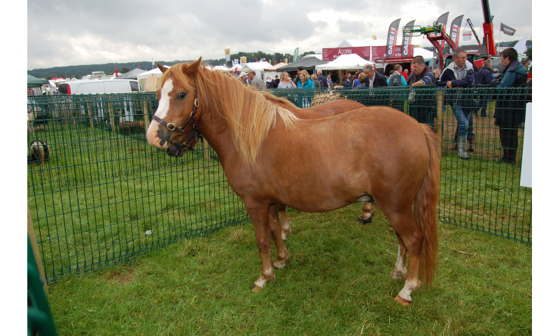 rare-breed-terry-bog-pony-2012-1