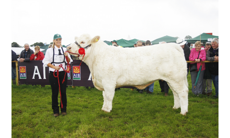 terry-smeaton-class-93charolais-famale-in-calf-or-with-calf-at-foot