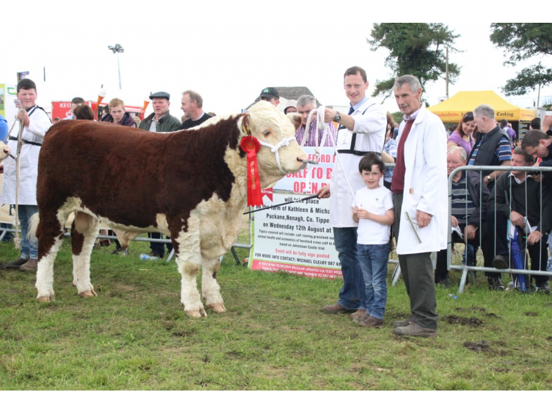 class-88-national-hereford-bull-tom-anselm-fitzgerald-c.kinnarney-tullamore-show-2015-632-medium