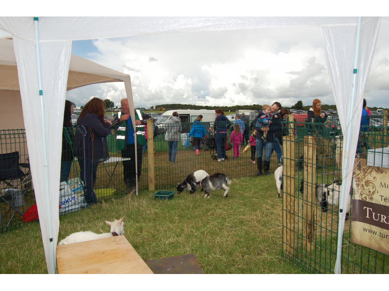 goats-in-trade-stands