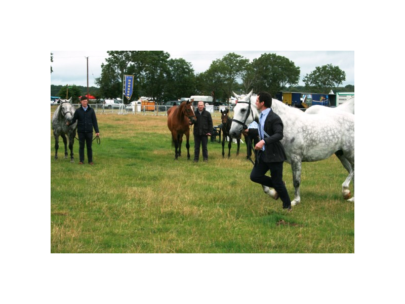 img-4806-equestrian-at-tullamore-show-horses-with-handlers-bridie-roe