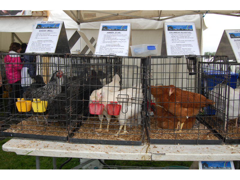 poultry-2012-4-1