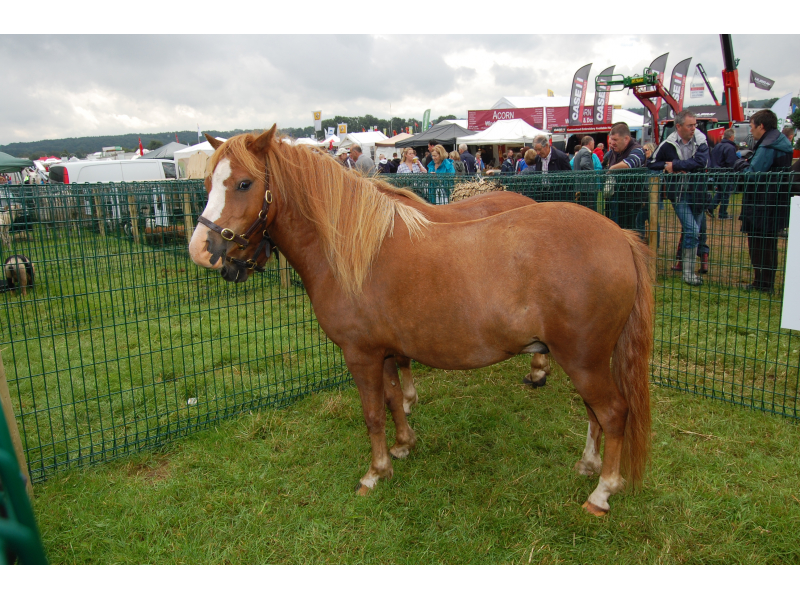 rare-breed-terry-bog-pony-2012